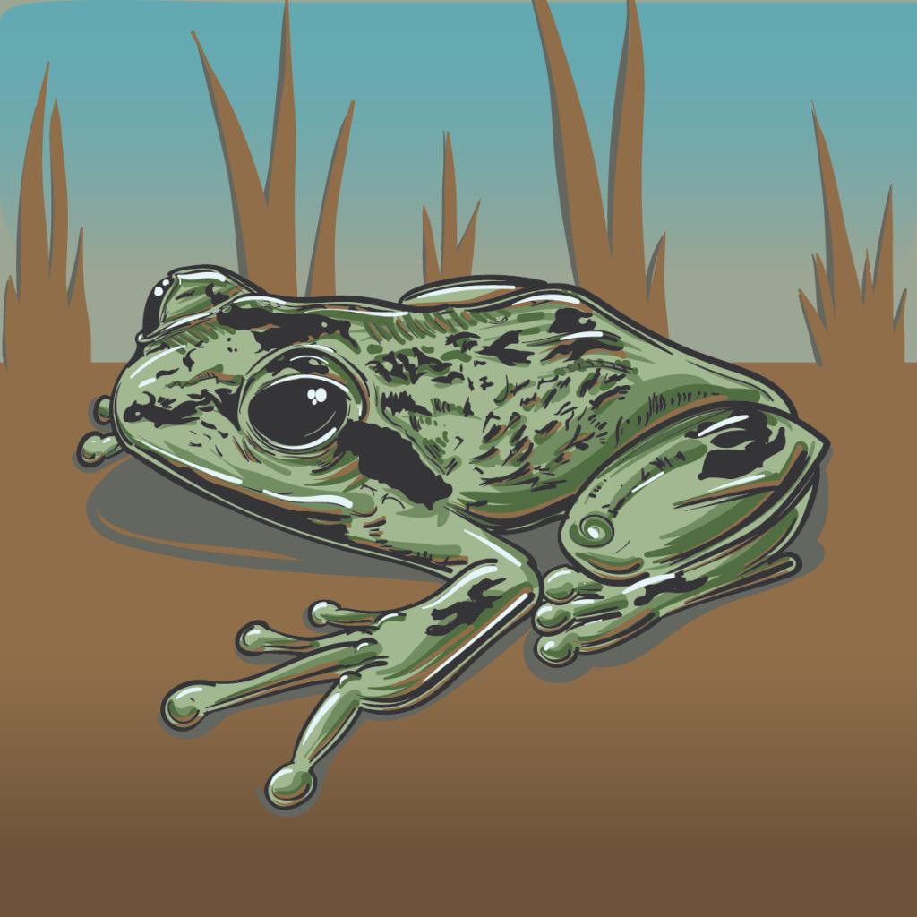 Humboldt Frog